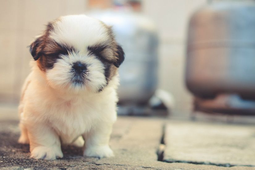 ... Cute Puppy Wallpaper - QiGe87.com ...