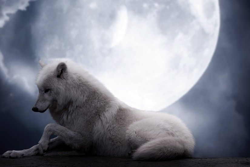 Preview wallpaper wolf, moon, lie, predator 1920x1080