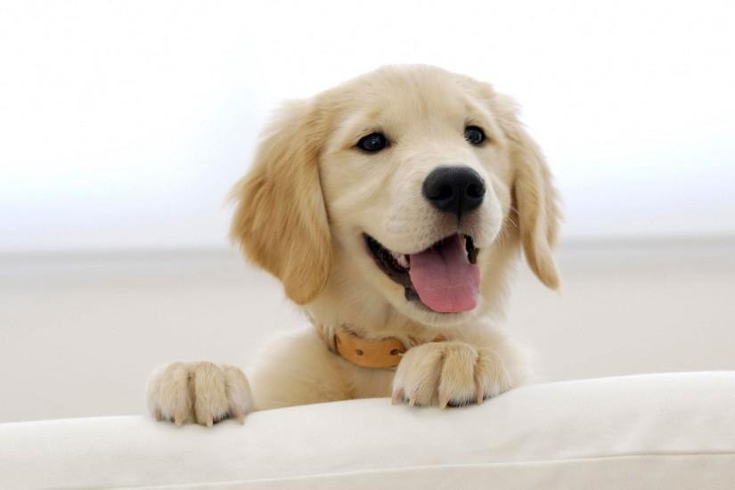 puppy wallpaper 1920x1200 free download