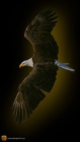 Bald eagle, graphic by Hope Rutledge