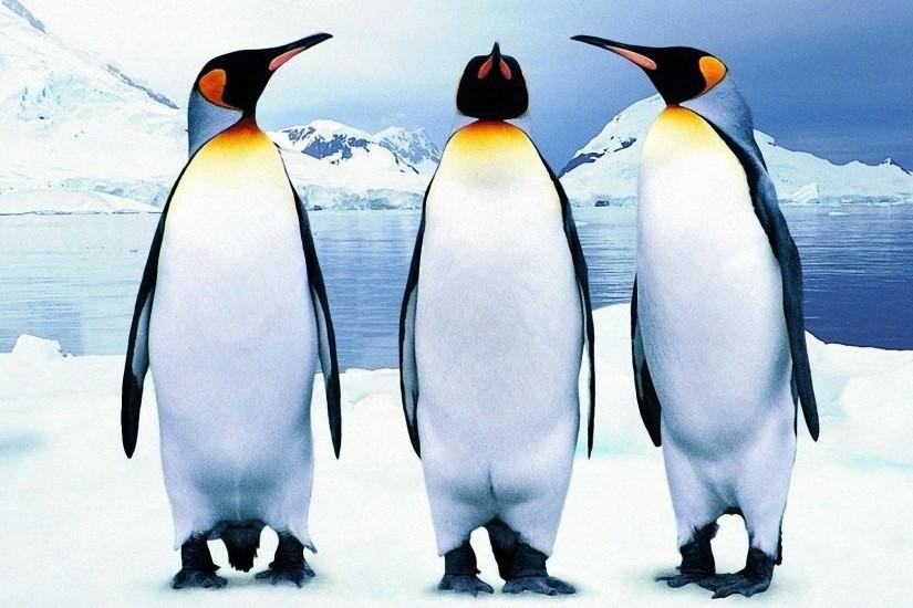 penguin and 34 05kg emperor penguins age Keygenmusic(origins) file size: 33430 mb file count: emperor battle for dune teleport pro 1292085kgxm 3494 kb deviance/deviance - age of empires iii v1.
