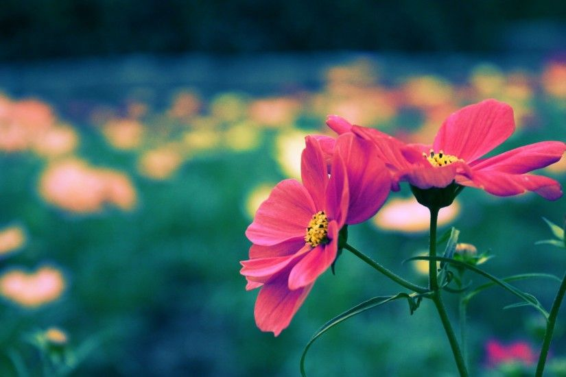 Download Cute Flower Wallpapers for Desktop