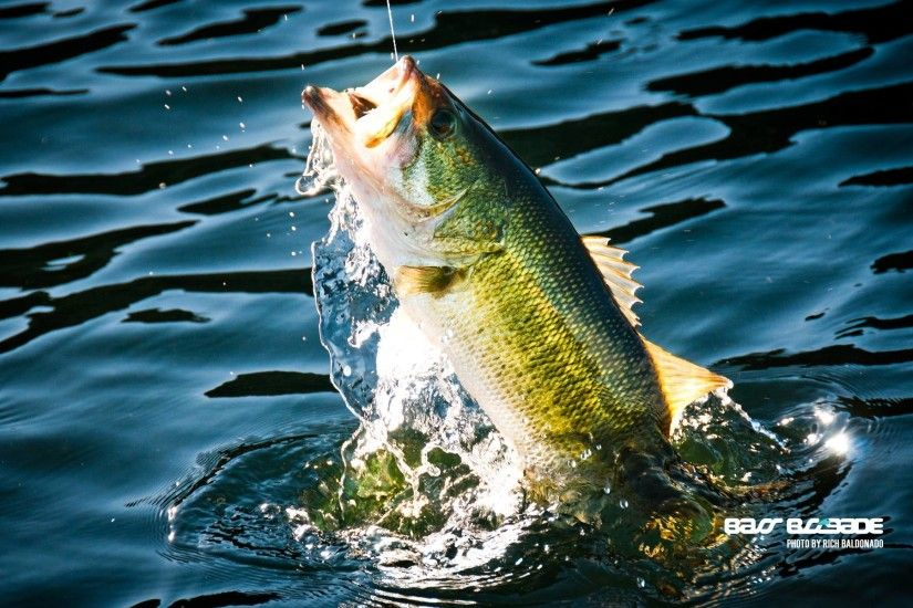 Bass Fish Wallpaper - Wallpaper And Background