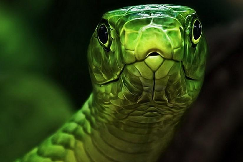 Snake Amazing Wallpapers.