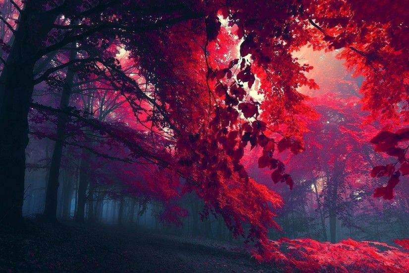 Ome Tag - Autumn Red Foliage Grass Ome Beautiful Day Amazing Plants Awesome  Place Colors Splendor