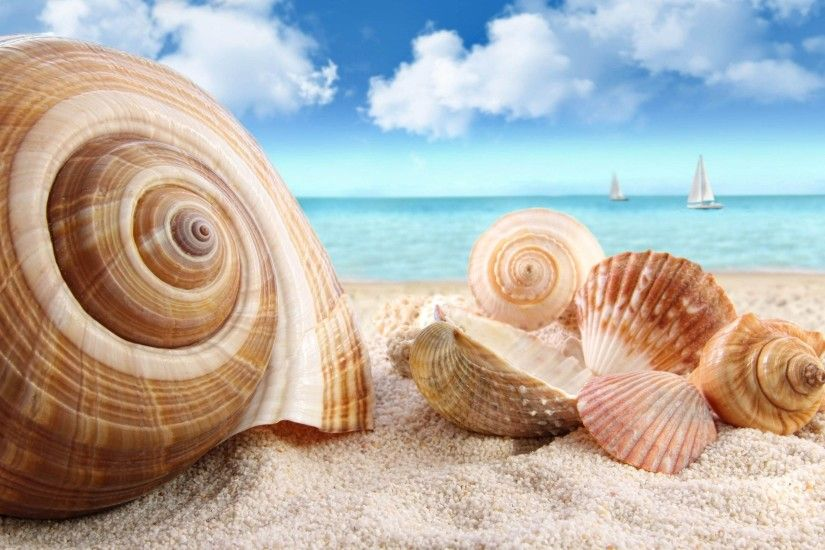 sea shells wallpaper | Free Top 10 High Definition Wallpapers
