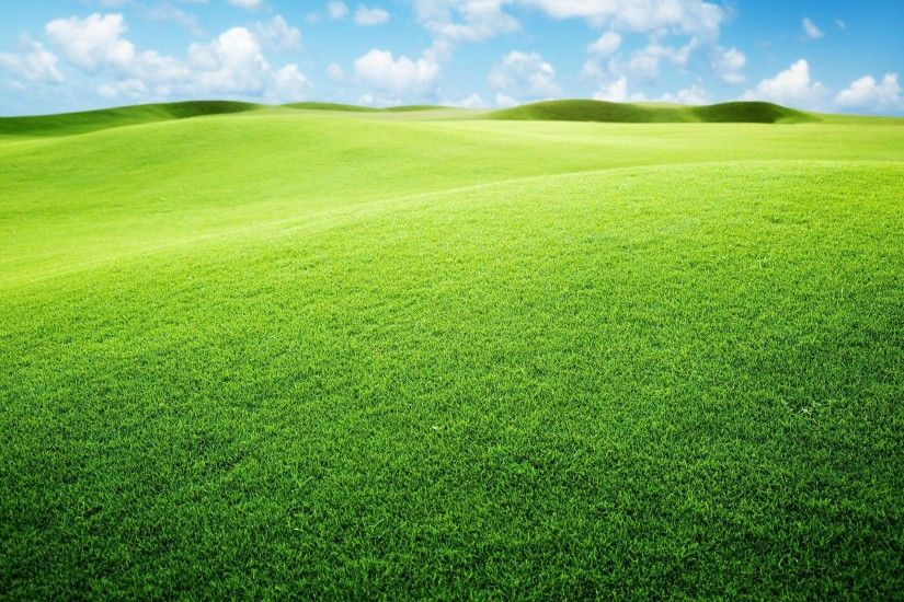Images For > Cartoon Grassland Background