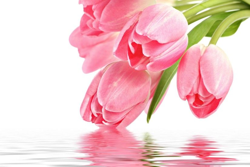 Pink Tulips 22698