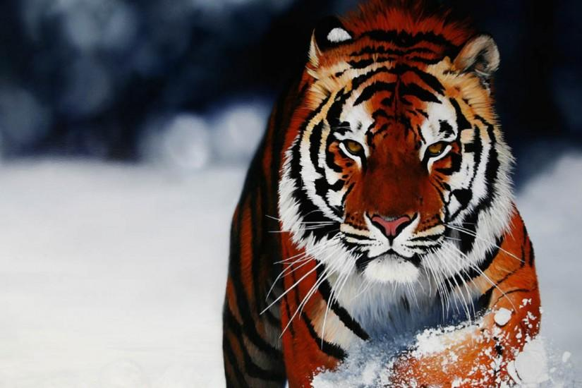 animal backgrounds photos animal backgrounds hd wallpapers animal .