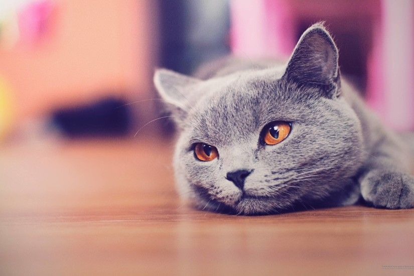 Cute Cat Desktop Wallpaper - Animals, Cute Wallpapers