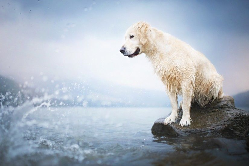 golden retriever pic - Full HD Wallpapers, Photos by Denley Smith  (2017-03-12)