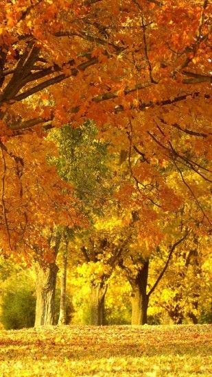 1440x2560 Wallpaper fall, trees, leaves, foliage