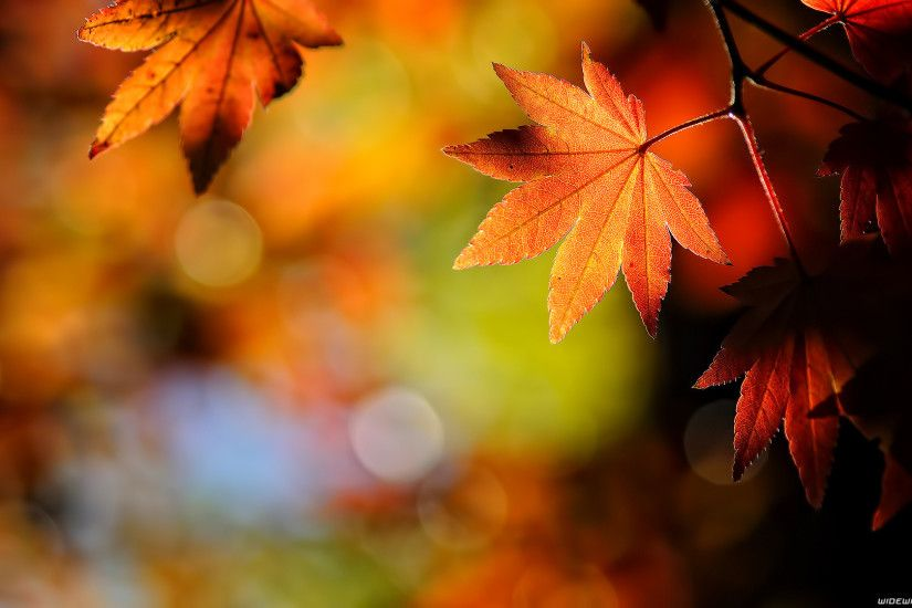 Autumn Wallpaper Al49a