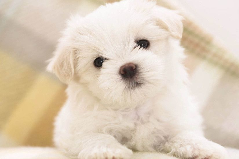 Dog Wallpapers Images