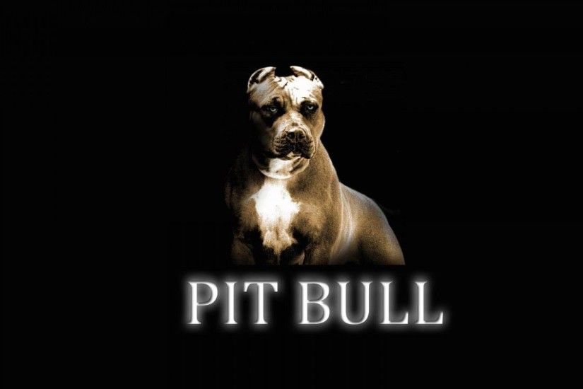 Pitbull desktop background.