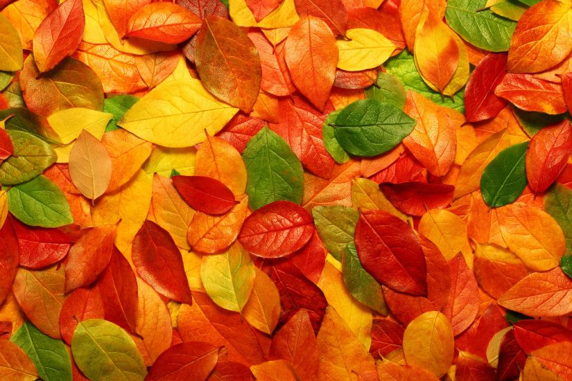 HD Autumn Leaves Wallpaper