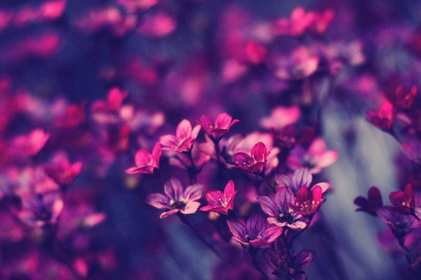 vintage flower background hd