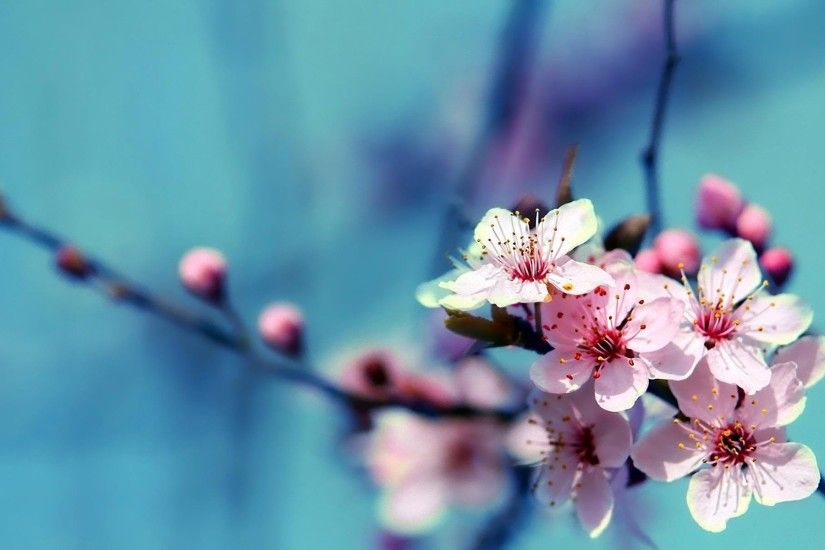 ... HD-Beautiful-Flowers-Wallpapers-1 ...