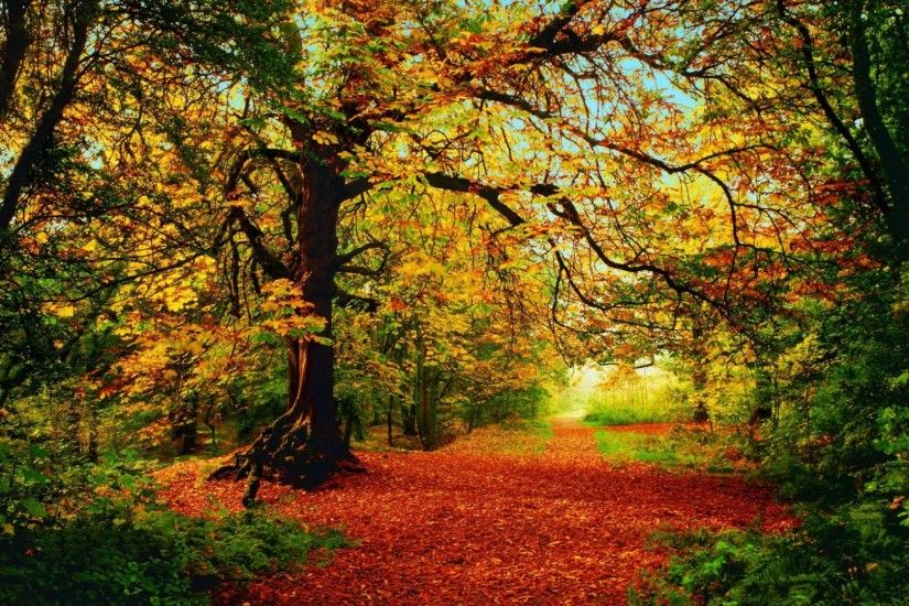 Seasonal Tag - Fall Path Leaves Colors Forest Autumn Seasonal Desktop  Wallpaper Forests for HD 16