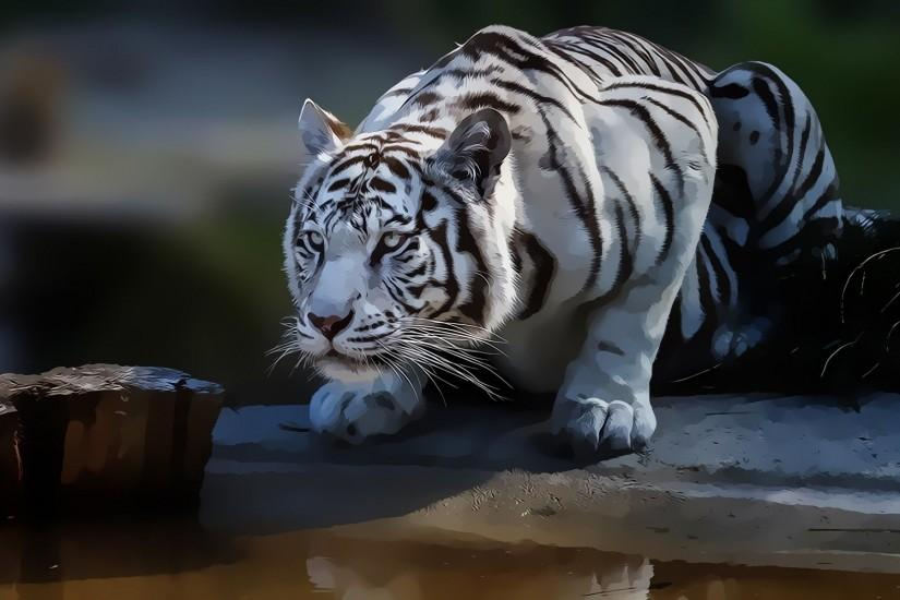 White Tiger HD Wallpapers | Mojo Wallpapers