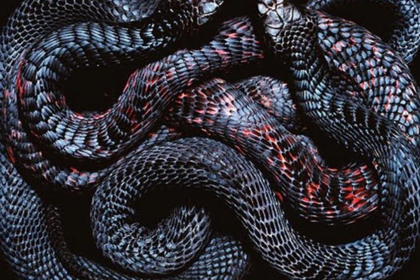 Slither Snake wallpaper - 711207