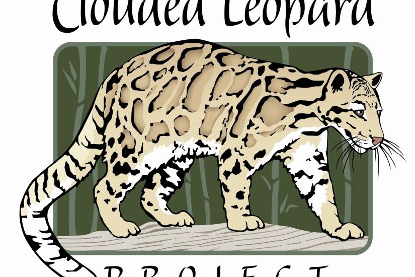 Clouded Leopards images Clouded Leopard HD wallpaper and background photos