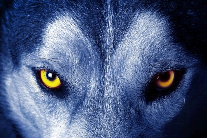 Full HD 1080p Wolf Wallpapers HD, Desktop Backgrounds 1920x1080 .