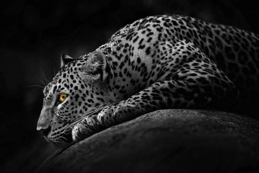 Jaguar Animal Wallpapers - Full HD wallpaper search