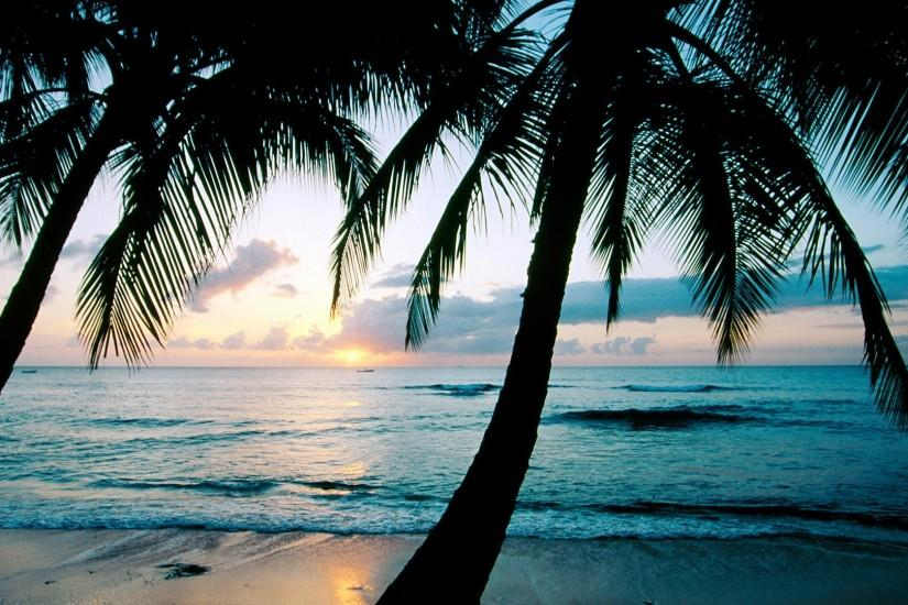 Images Beach Palm Tree Wallpapers.
