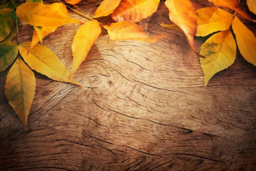 most popular autumn background 2563x2160 for retina