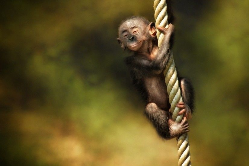 Cute Monkey Wallpapers