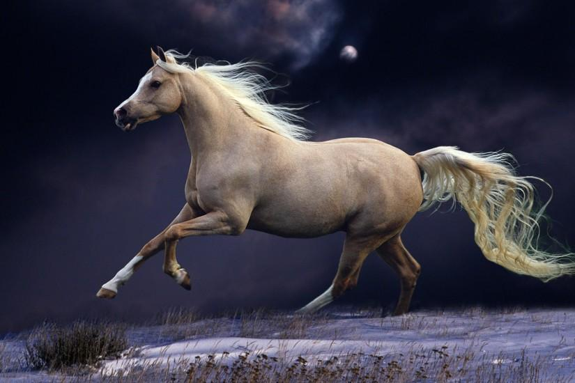 widescreen horse wallpaper 1920x1080