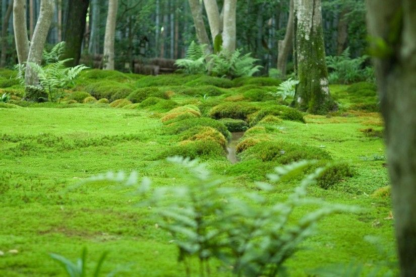 Japan Green Forest. Japan Green Forest Desktop Background