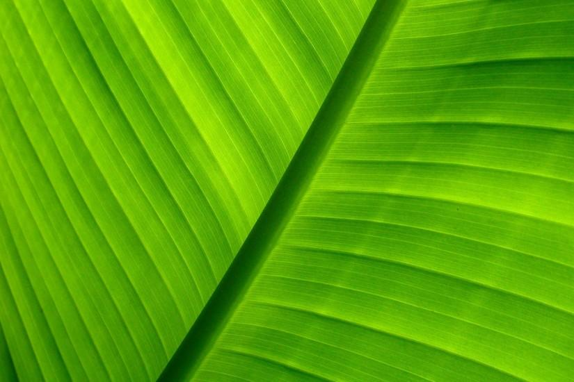 green ppt background #509