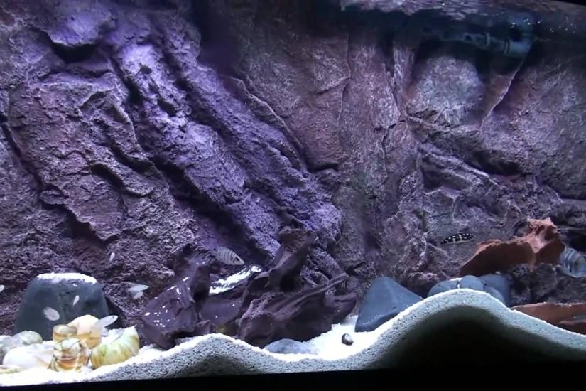 Custom 3D Designs by Nature Aquarium Background www.designsbynature.net -  YouTube