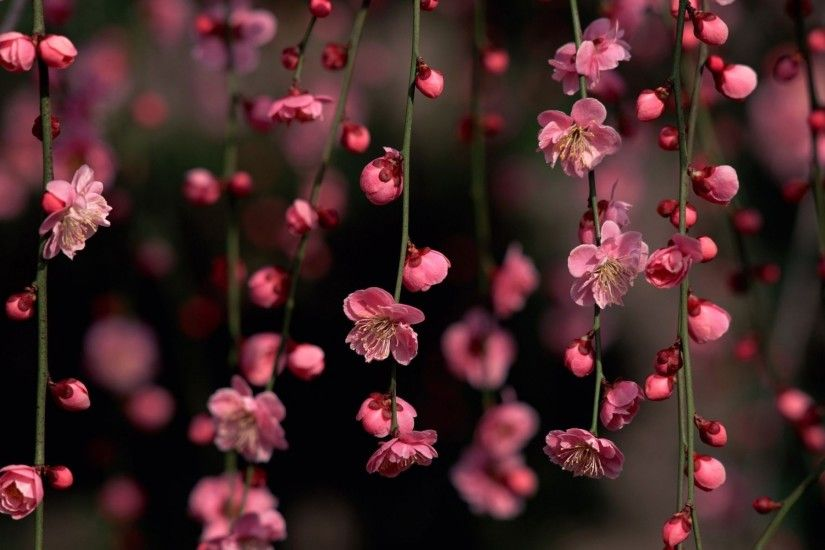 ... 44 Pink Flower Backgrounds ...
