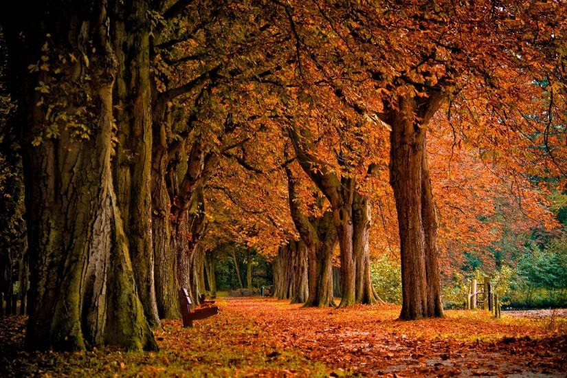 free download autumn background 2560x1600 windows 10