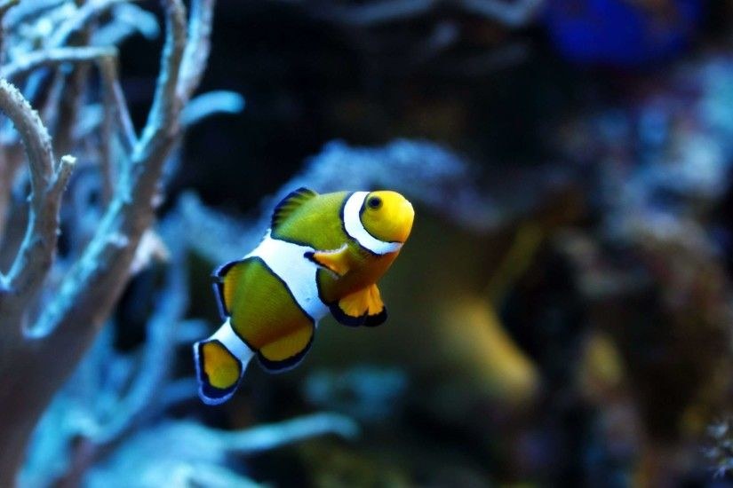 Fish Backgrounds Wallpapers - HD Wallpapers