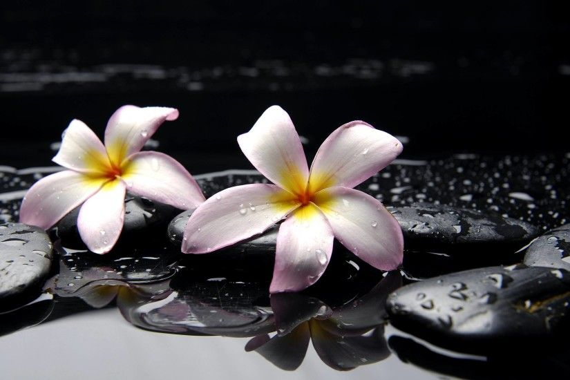 Plumeria HD Wallpapers - HD Wallpapers Inn