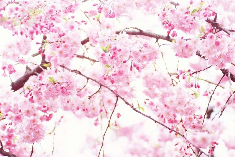 Pink Flowers Wallpapers for Desktop 1024×768 Pink Flowers Wallpaper (50  Wallpapers) |