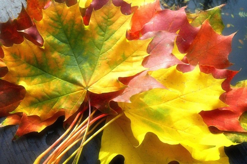 Fall Leaves Wallpaper Autumn Nature Wallpapers