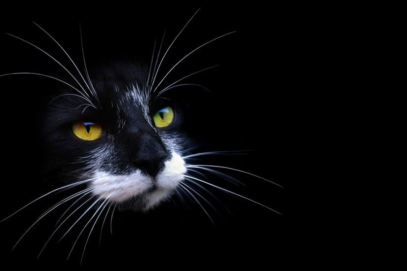 Wallpapers Black Cat Wallpaper 1920×1200