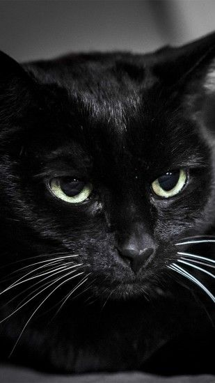 Preview wallpaper black cat, muzzle, eyes 1440x2560