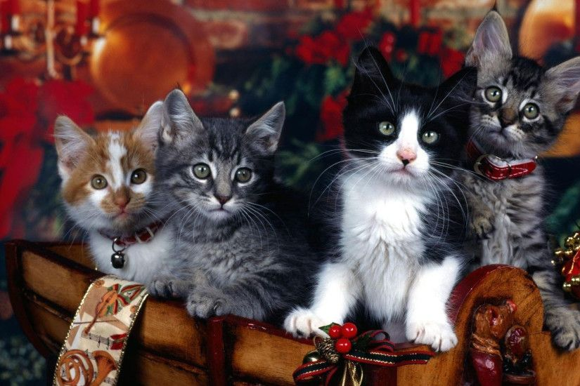 hd pics photos cute attractive christmas cats decorations hd quality  desktop background wallpaper