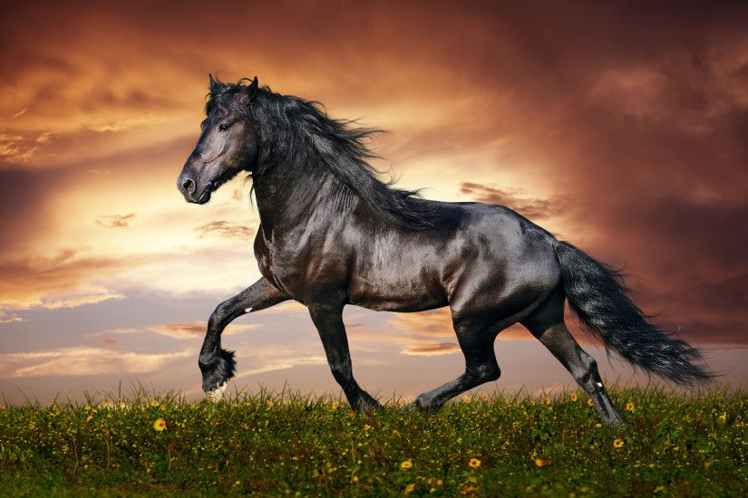Download stunning hd black beautiful horse background.