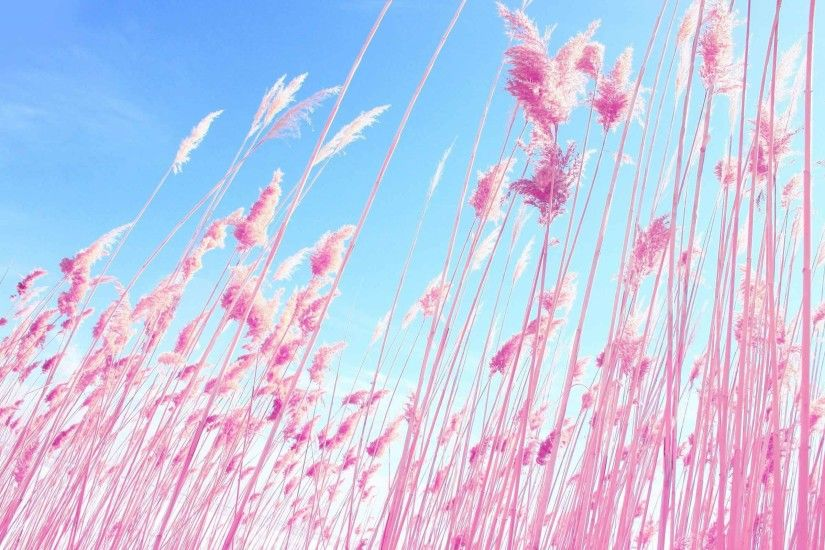 Plants Grass Dreamy Macro Pink Nature HD Live Wallpapers Download
