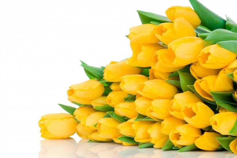2560x1600 Wallpaper tulips, flowers, yellow, flower, lie, white background