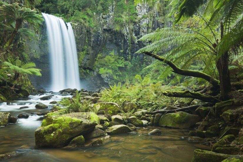 Rainforest Wallpapers - Full HD wallpaper search
