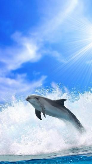 Dolphin Iphone Wallpaper Ocean Dolphins Iphone 6 Plus