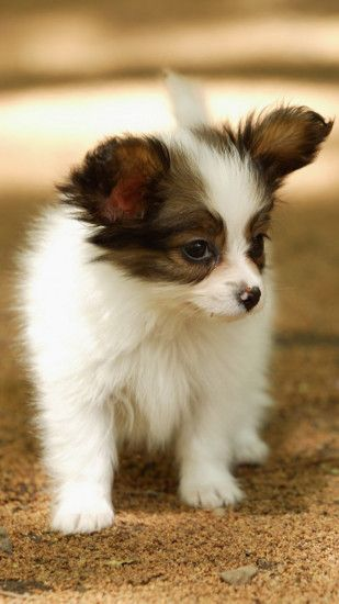 Cute Lovely Puppy Walking Dog Animal iPhone 6 wallpaper